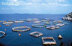 Fish Farm in Saronic Gulf'
